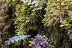 Ferns on mossy trunk, Larachmor Gardens