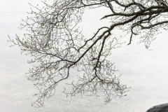 Birch branches, Loch Morar