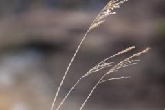 Three reeds, Camas na Rhuaidhe