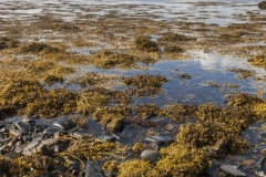 Foreshore, South Channel of Loch nan Ceall