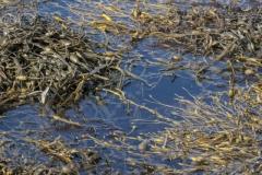 Low tide, Loch nan Ceall