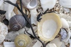 Shell beach detail, Traigh House Beaches