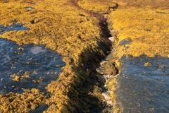Shoreline detail, Ardnish, Skye