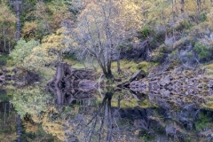 Woods and reflections, autumn, Loch Beinn a'Mheadhoin