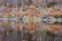 Autumn birch woods, Loch Affric