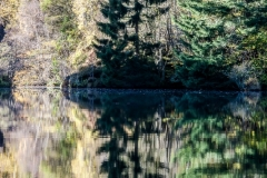 Woods and reflections, Aigas Gorge
