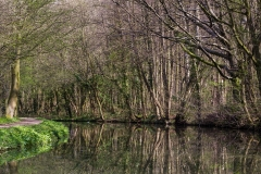 Reflections of trees, Chesterfield Canal